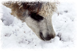 雪も食べちゃう