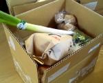 賞品の野菜とお米のセット