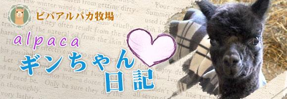 ギンちゃん日記