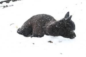 雪上のルネ