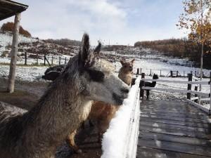 初雪を食すチョッパー