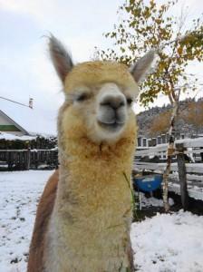 ソラ・初雪