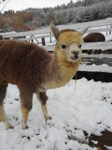 ソラ・初雪②